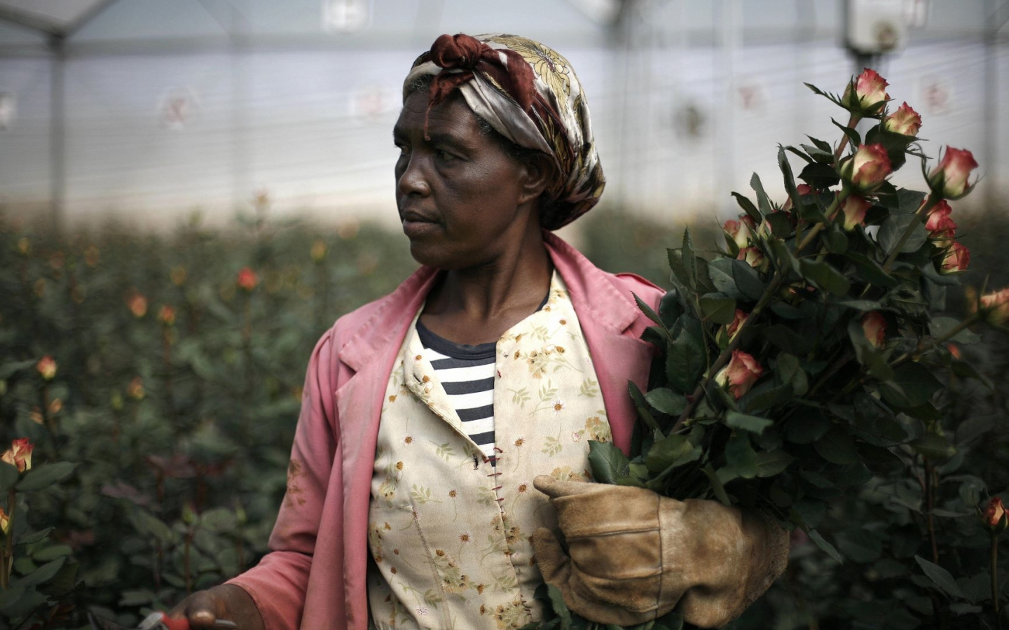 Effective Government for Africa's Agricultural Transformation ...