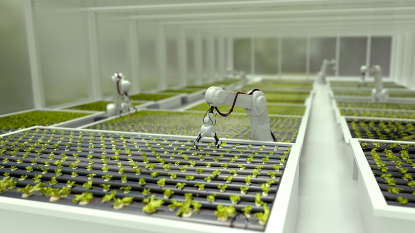 3D robots growing lettuce in a greenhouse
