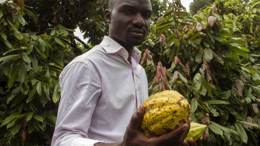 Stephen Sembuya, co-founder of the Pink Food Industries, holds two pods of cocoa at the families farm in Wakiso, Uganda
